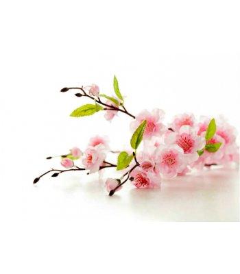 Higgy's Cherry Blossom